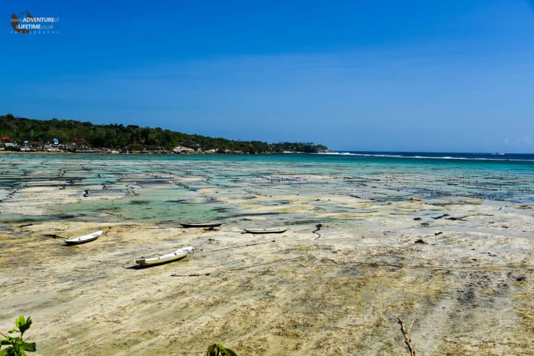 A Seaweed Farm off the coast of Nusa Lembongan