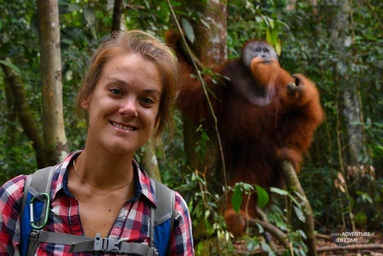 Dora and male Sumatran Orangutan