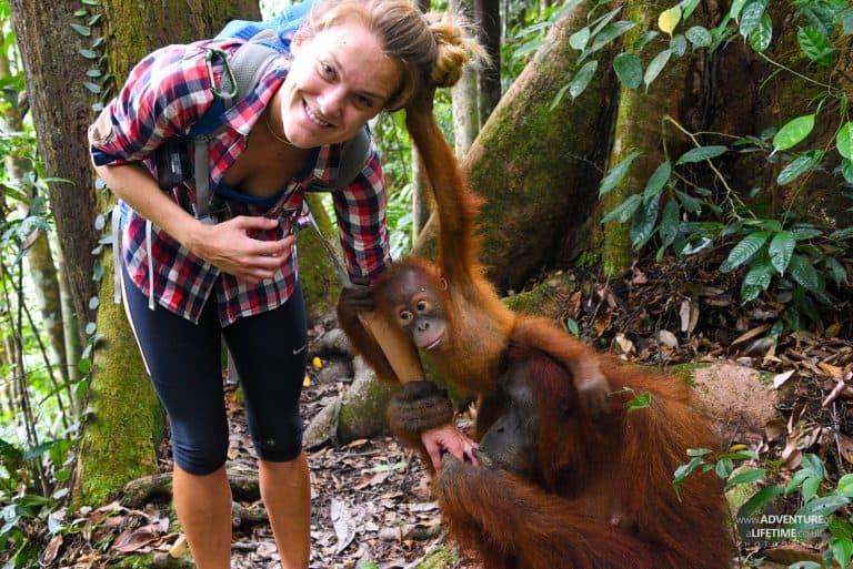 Dora with Sumatran Orangutan Jackie and her cheeky baby
