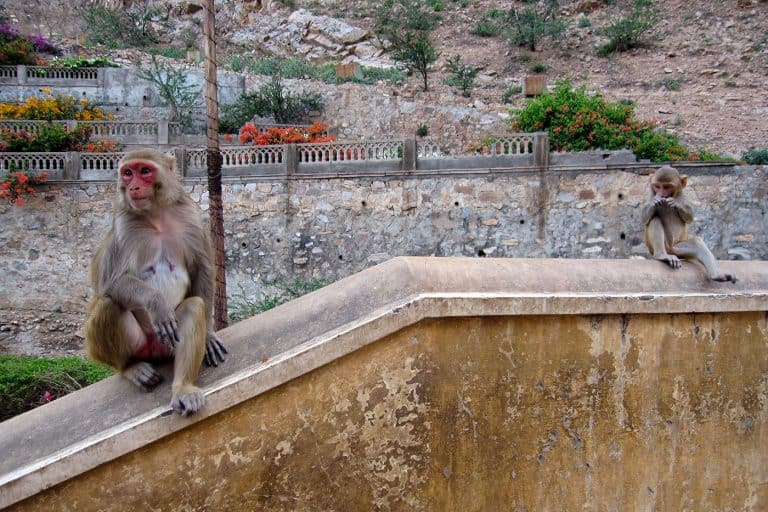 Monkey Temple, India